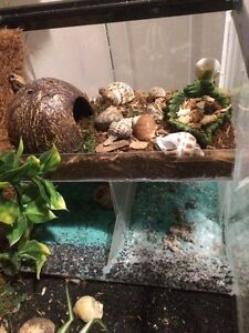 Custom Hermit Crab Tank London Ontario image 4