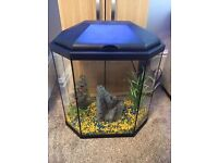 25 Litre Aquarium in Black with Accessories - Total cost of over £100 when new.