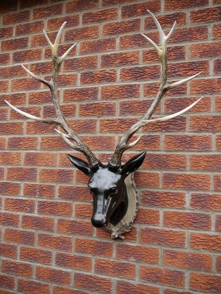 Stags Bust Stag Head Wall Mounted Stags Head Deer