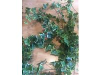 4m (approx) of realistic decorative Ivy