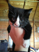 Kitten Looking for his Furrever Home!