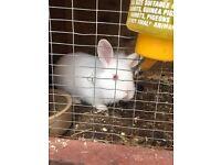 Gorgeous Baby White Rabbits