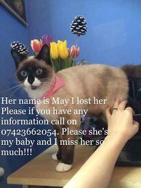 Reward missing cat
