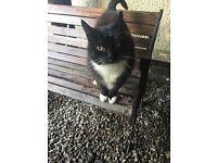 Black n white Tom cat