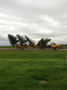 Big Valley Tree Movers, and Tree Farm.