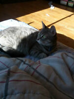 Beautiful, FREE, affectionate female cat to go to a new home