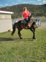 Beautiful Standard bred 9yr. old mare for sale