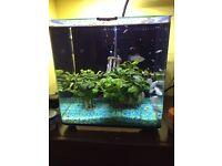 Molly fish, zebra snail babies or whole tank
