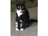 ONE YEAR OLD FRIENDLY FEMALE CAT