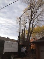 NEXT LEVEL TREE SERVICE *fully insured, fair priced and equipped