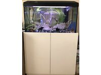 Tropical fish tank with a lots of fish