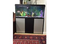 Fish tank with tropical fishes
