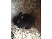 Rabbits and hutches