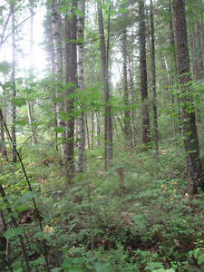 Lot for Sale Prince George British Columbia image 3