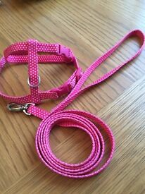 Harness and lead set