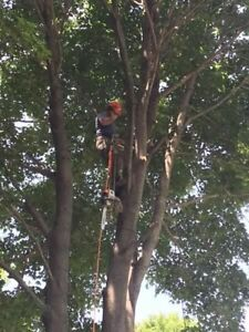 Tree removal services  London Ontario image 10