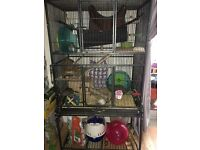 Large cage with all accessories for degus