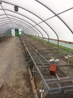90 FOOT , ROLLING GREENHOUSE BENCH