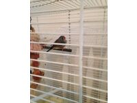 2 finches and cage