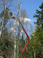 Tree Removal.. We Use The Only 100' Mini Lift. Safest In Town!!