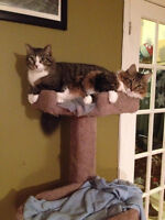 Looking for a good home for my 2 adult cats