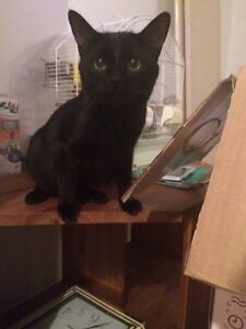 2 year old male cat to rehome!