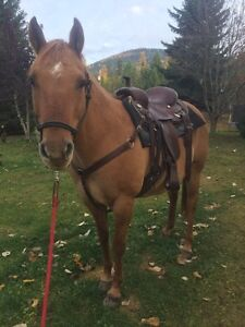 8 Year Old Red Roan QH mare. Awesome trail horse!