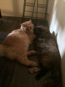 Cats for a forever home