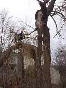 Lumbersmith Tree Removal Services Cambridge Kitchener Area image 3