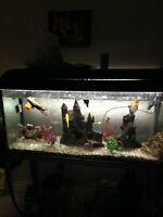 50 gal. Fish Tank, incl 6 fish, all tank accessories