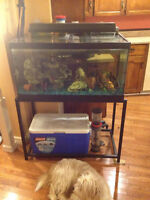 50 gal fish tank and stand