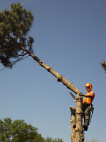 TOP NOTCH TREE SERVICE- Affordable quality service guaranteed