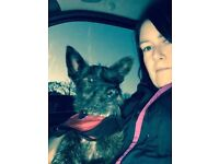 Dog walking and pet sitting places available