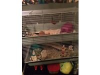 Two storey guinea pig/ rabbit cage