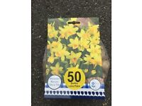 Tate a tate bulbs 50 for only £2