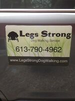 Dog Walking ( Vanier to Blackburn ) East Ottawa