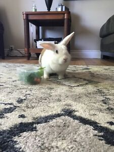 Year old bunny looking for a home Peterborough Peterborough Area image 1