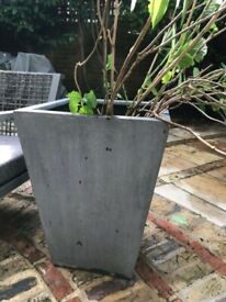 Giant grey pot planter with mature hyfrangea