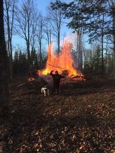 Property wanted for logging/firewood