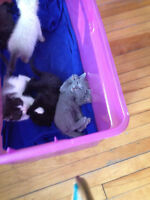 ***FREE Kittens  to good home glace bay***