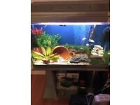 120L Fish Tank with Stand