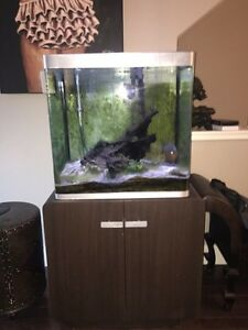 Fish tank for sale x2 and stand