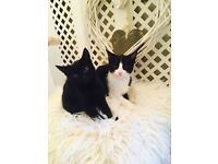 3 beautiful kittens boys & girls been de flead and wormed ready now