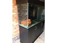 5x1,5x2ft tropical Malawi marine fish tank aquarium with full setup