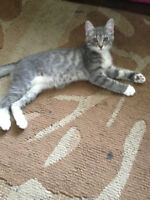 looking for a loving home for you kittie