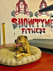 15% OFF!!! Showtyme Fitness - London's Personal Training London Ontario image 5