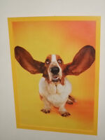 Basset Hound Flying Ears Print