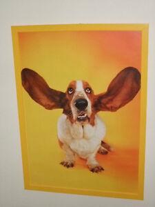 Basset Hound Flying Ears Print