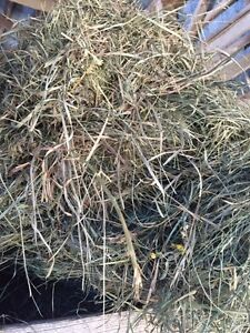2nd cut hay in small squares
