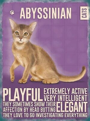 Abyssinian Cat Colourful Metal Fridge magnet Sign for sale  Shipping to Canada